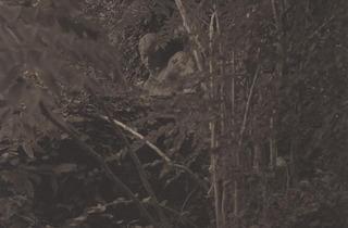 Los murmullos del bosque