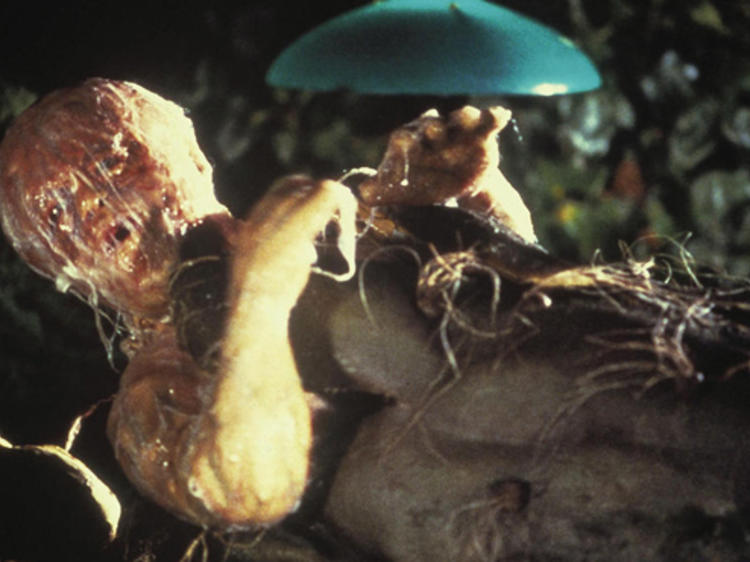 <em>Invasion of the Body Snatchers</em> (1978)