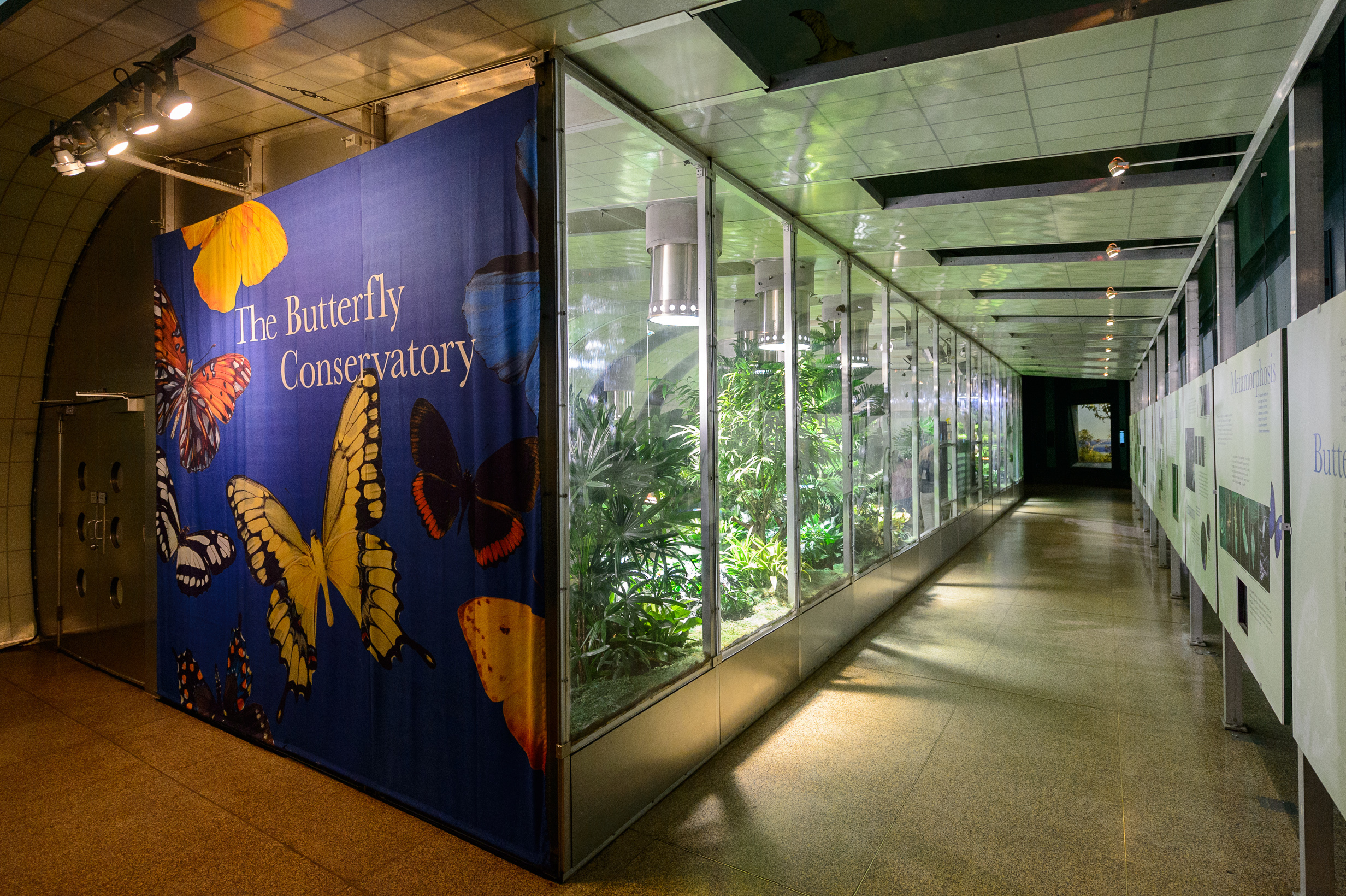 Let the Butterfly Conservatory set your heart a flutter