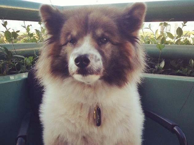 The Great Escape Pet Adoption Drive