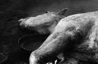 Le Sang des bêtes (1949)