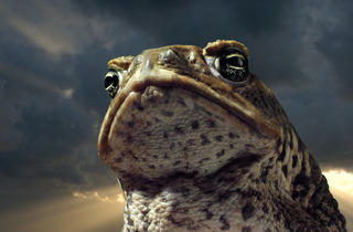 Storm_Toad.jpg