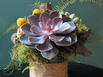 V-Day clich� FlowersUpgrade We say a bouquet of carnations is grounds for a breakup, so opt for something a little more exotic. Local company Hidden Folk creates  cool succulent arrangements (a single is $35; a small arrangement is  $65) nestled in mo...