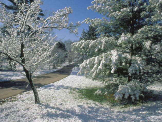 Snowshoeing at Morton Arboretum