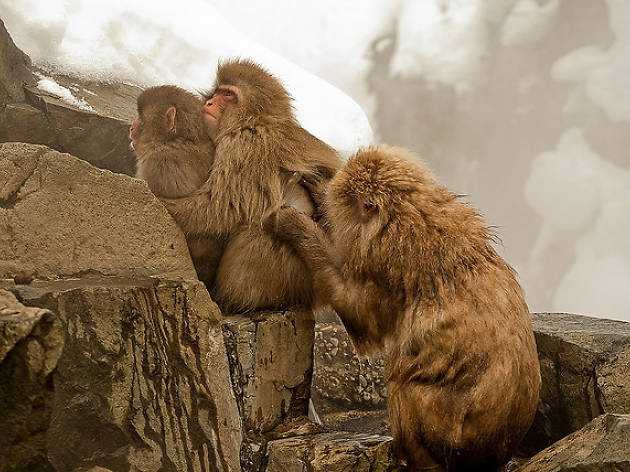Wine & Wildlife: Designing a Home for Snow Monkeys