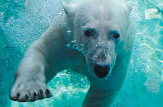 FREEze Day at Brookfield Zoo