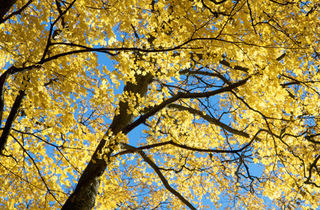 Enjoy the changing leaves on a hike through one of Chicagoland's many trails.