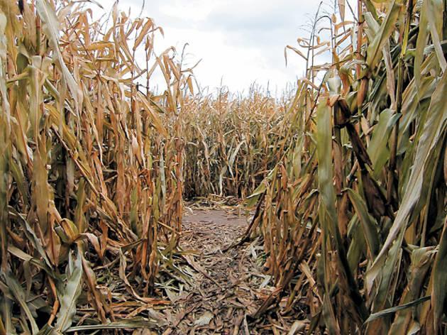 The best corn mazes near Chicago