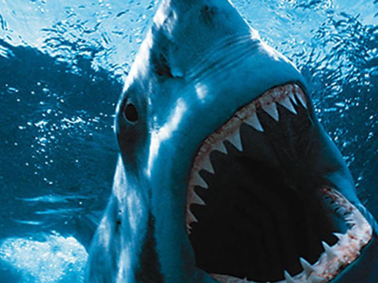 Os melhores filmes de sempre com tubarões