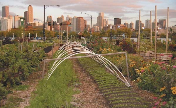 Sustainable Vows: Art, Sustainability & Urban Farming Fest