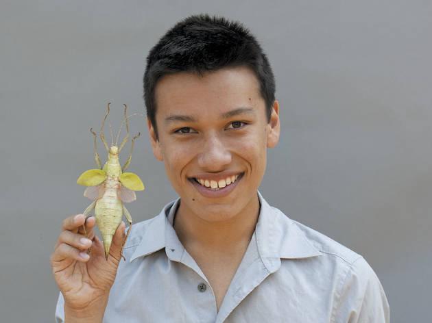 344.ac.ft.insects.MatthewKrisiloff2.jpg