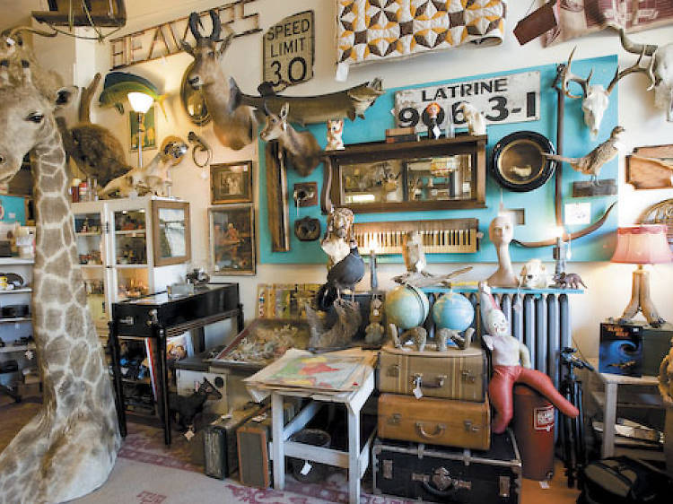 Find something strange at Woolly Mammoth Antiques & Oddities