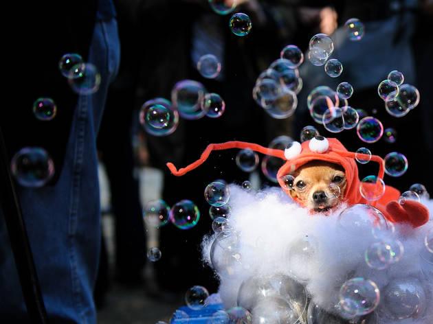Judging the Tompkins Square Park Halloween Dog Parade (2013)