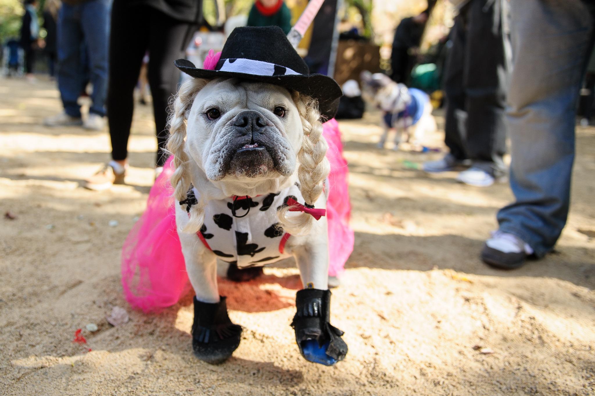 Tompkins Square Park Halloween Dog Parade (2013)