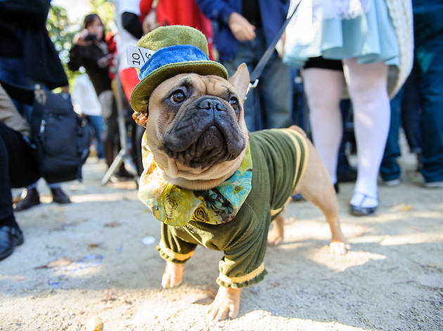 12 things only pet owners in NYC will understand