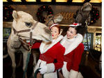 Ted the camel gets a kiss from Rockette Jessica Osbourne on his first day of rehearsals for the 2013 Radio City Christmas Spectacular