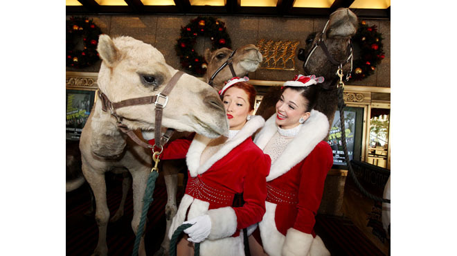Meet the cute animals in the Radio City Christmas Spectacular
