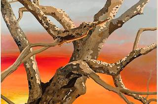 """Alison Elizabeth Taylor, """"Surface Tension"""""""