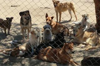 "Baja Animal Sanctuary Presents ""Friends Across the Border"""