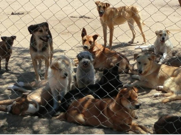 "Baja Animal Sanctuary Presents ""Friends Across the Border"""