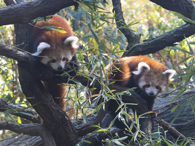 Bronx Zoo Wildlife Conservation Society