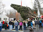 Neighbors look on as the 76-foot-tall Norway spruce from Shelton, CT, is cut down for the 2013 Rockefeller Christmas Tree