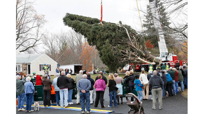 The Rockefeller Christmas Tree is on its way to NYC (2015)