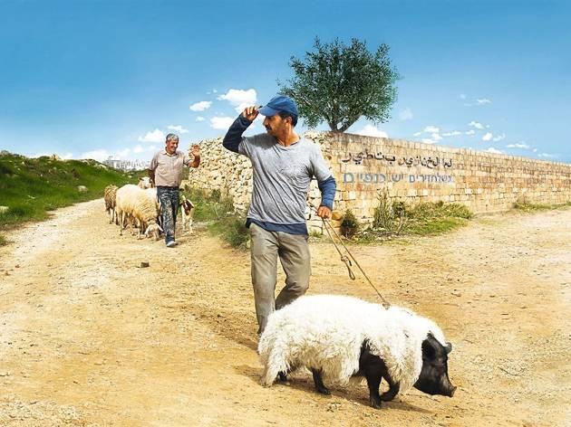 Un cerdo en Gaza