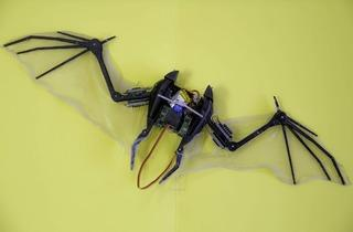 Bat-Bot (© Centre for Automatic and Robotics of the Universidad Politécnica de Madrid, Spain)
