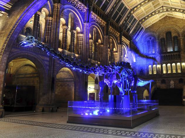 Dino Snores, Natural History Museum, © NHM