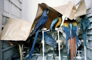 Richard Ross ('Musem National D'Histoire Naturelle, Paris', 1982)