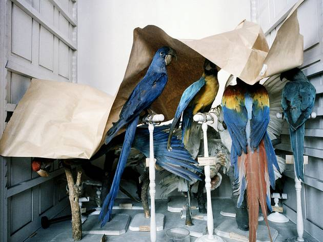 Richard Ross ('Musem National D'Histoire Naturelle, Paris', 1982)