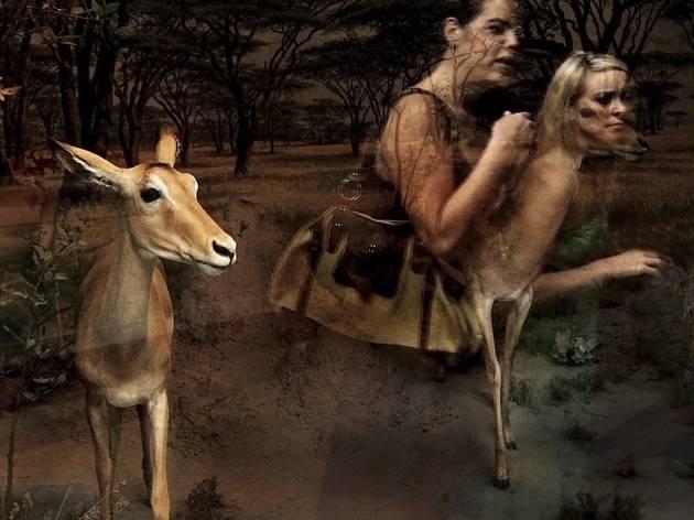Traer Scott ('Gazelle')