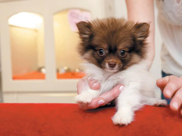 Pocket Puppies Boutique