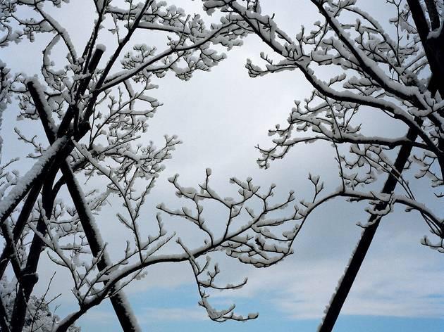 Chris Steele-Perkins ('Snow on mountains in Shizuoka prefecture')