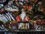 Fish harvest