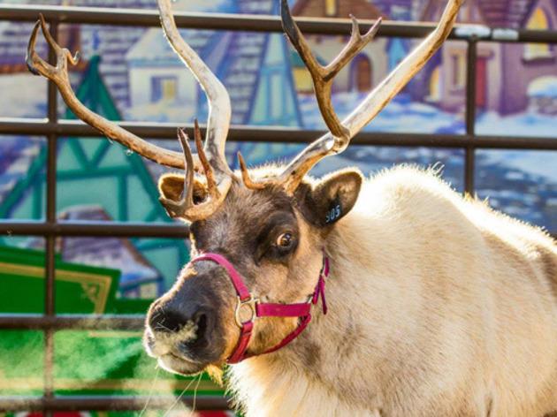 Reindeer Romp.