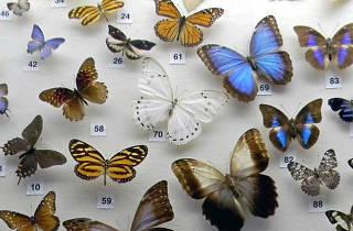 Colección Nacional de Insectos