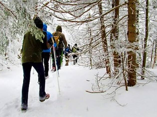 Winter Mountain Escape: All-Day Hike