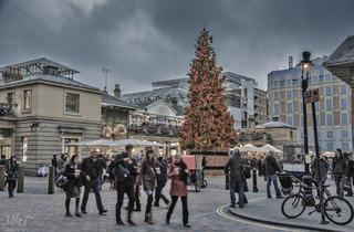 Covent Garden tree