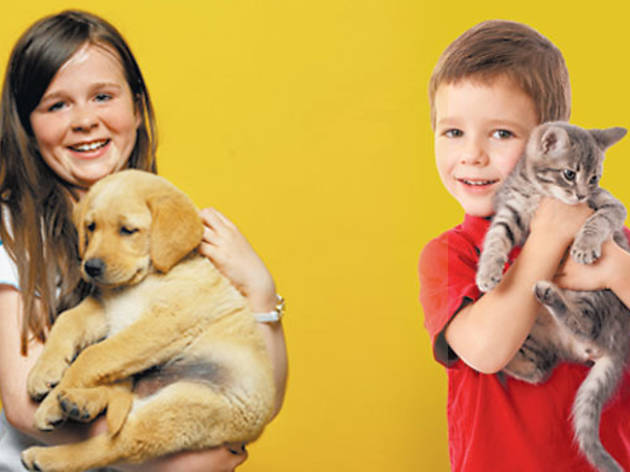 Milagros Caninos. Perros