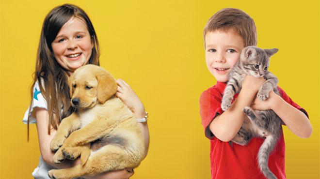 Adopción mascotas