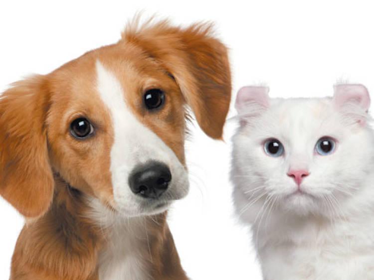 Adopta una mascota en la Secretaría de Seguridad Ciudadana
