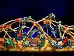Cirque du Soleil presents TOTEM at the Santa Monica Pier. High Bars Carapace