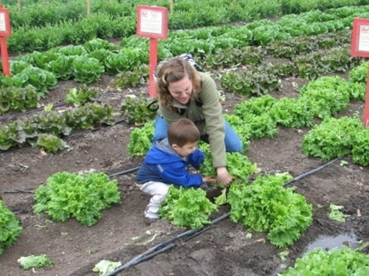 Visit Underwood Family Farms
