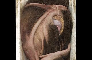 Alex Van Gelder (Meat Portrait #038, 2012)