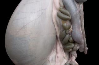 Alex Van Gelder (Meat Portrait #015, 2012)