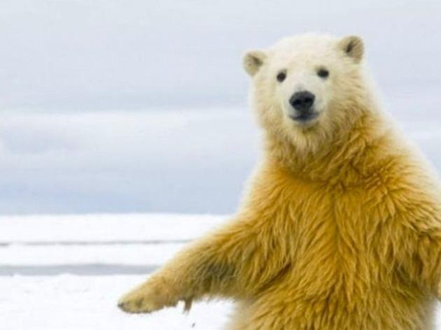 Des crêpes et des ours