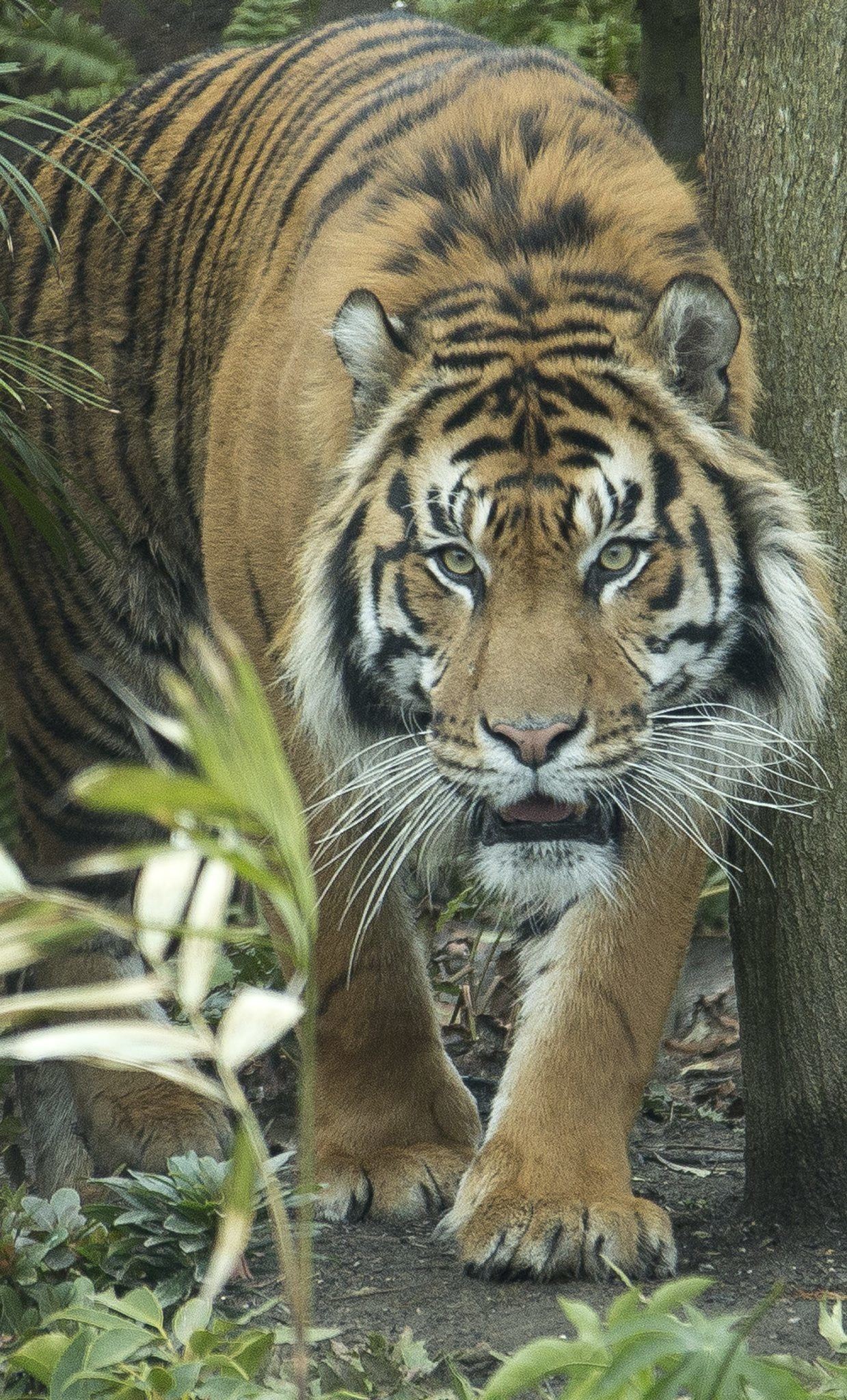 Go deep into Tiger Territory at London Zoo