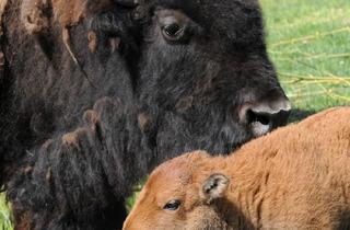 (Photograph: Brookfield Zoo)